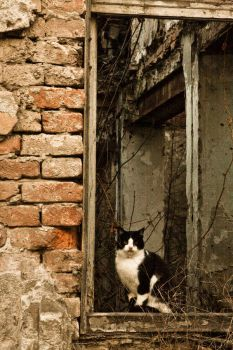 Cat on the Window by AnaHRV
