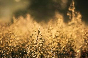 gold... by iwetka