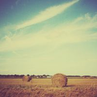 Hay by SARAHXIII