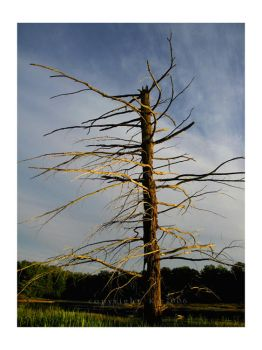 The Dead Tree by Kat2006
