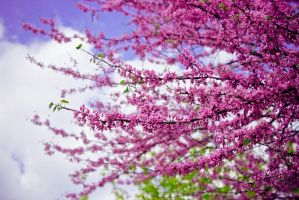 pink spring by a-place4my-head