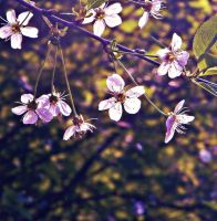 spring coming soon by Iridescent-happinesS