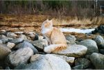 Cat in the spring time by Zenicel