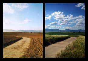 grain field - autumn + summer by fanessa