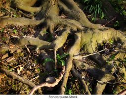 Roots 07 by AnitaJoy-Stock