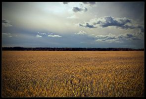 Fields of Gold by MegaTherionus