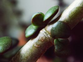 Growing by JayLPhotography