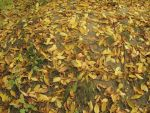 Leaves on the ground by AnastasieLys