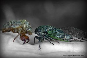 Cicada vs. Exoskeleton by UffdaGreg