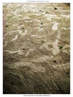 Footprints Without Feet by krishnachandranu