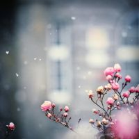 Wintertime... by MartaC