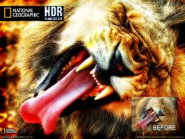 HDR Lion by M-AlJabarty