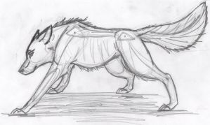 Wolf Anatomy by airhead77