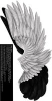 Dual Upright Wing - White-Black by Thy-Darkest-Hour