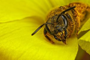 Eating Pollen IV by dalantech