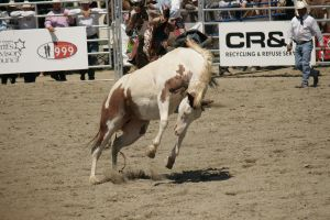 removed tack rodeo horse by kodalover