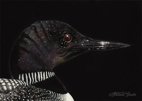Common Loon - Scratchboard by ShaleseSands