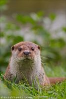 Otter 06 by Alannah-Hawker