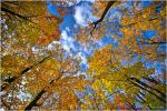 Autumn ..62.. by my-shots