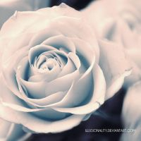 your cold love by illusionality