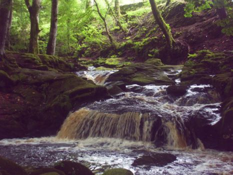 Off the path in County Wicklow by jinkies-christ