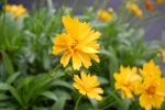 Yellow Flower by photofox56