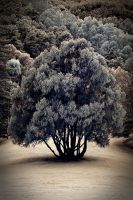 One Tree to Rule Them All by dzian