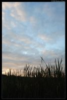 Among the Reeds by MushroomMagic