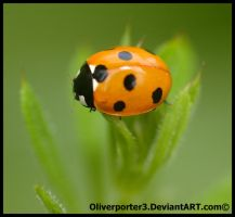 Simplistic Ladybird by oliverporter3