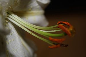 White flower.. by ColorTjeee