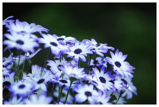 White and blue by petteram