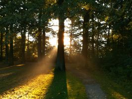 Rays of Autumn Light 3 by Dragoroth-stock
