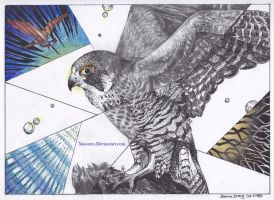 Peregrine Falcon Project by Xiaooyu