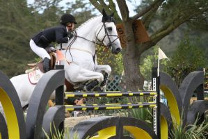 Gray Warmblood Horse Show Jumping at Pebble Beach by HorseStockPhotos
