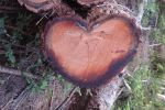 Nature Loves Me by musicboxdancr