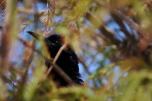 bird in the bush by Mjag