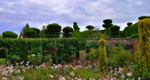 Tatton Park Topiary by Forestina-Fotos