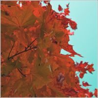 Leaves are autumn flowers by erezija