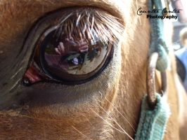 Smokey's Eye by CounterCanterPhotos