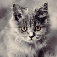 look on sweet cat by xTive