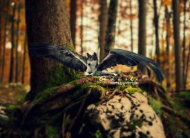 Nevermore  by Adarhi