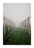 .fog and wine by nativa
