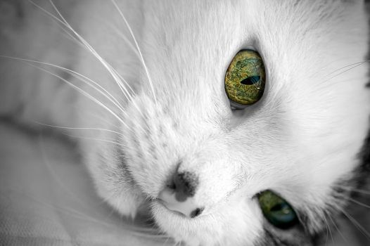 green eyes by Aspyrin