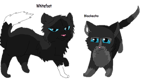 Whitefoot And Blackecho by TheHufflepuffCat