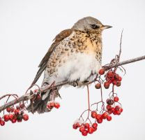 Bird10 by markotapio