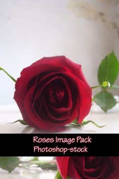 Roses Stock Pack by photoshop-stock