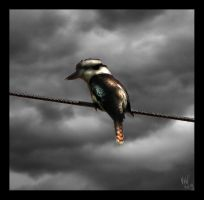 Kookaburra on a Wire by Seralunai
