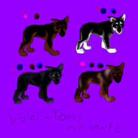 Violet x Tony - first litter! Open - 2 left by Violet-the-Siberian