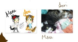 These are the cats that i have by sabitan