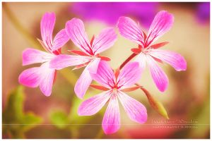 ...pink... by MartenD